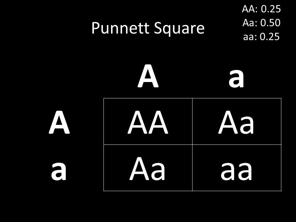 AA: 0.25 Aa: 0.50 aa: 0.25 Punnett Square A a AA Aa aa