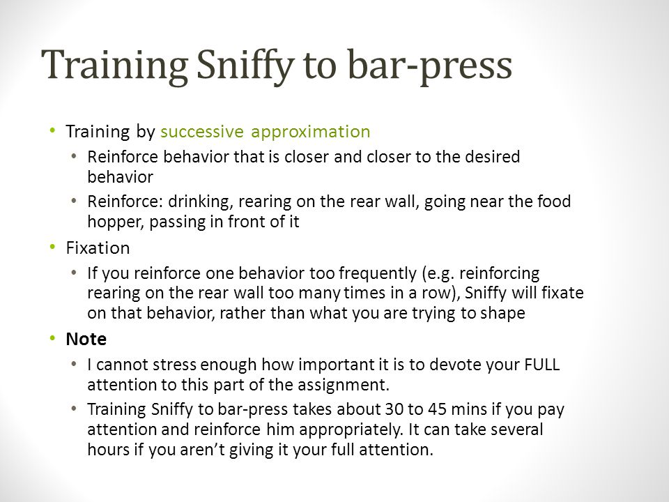 Training Sniffy to bar-press