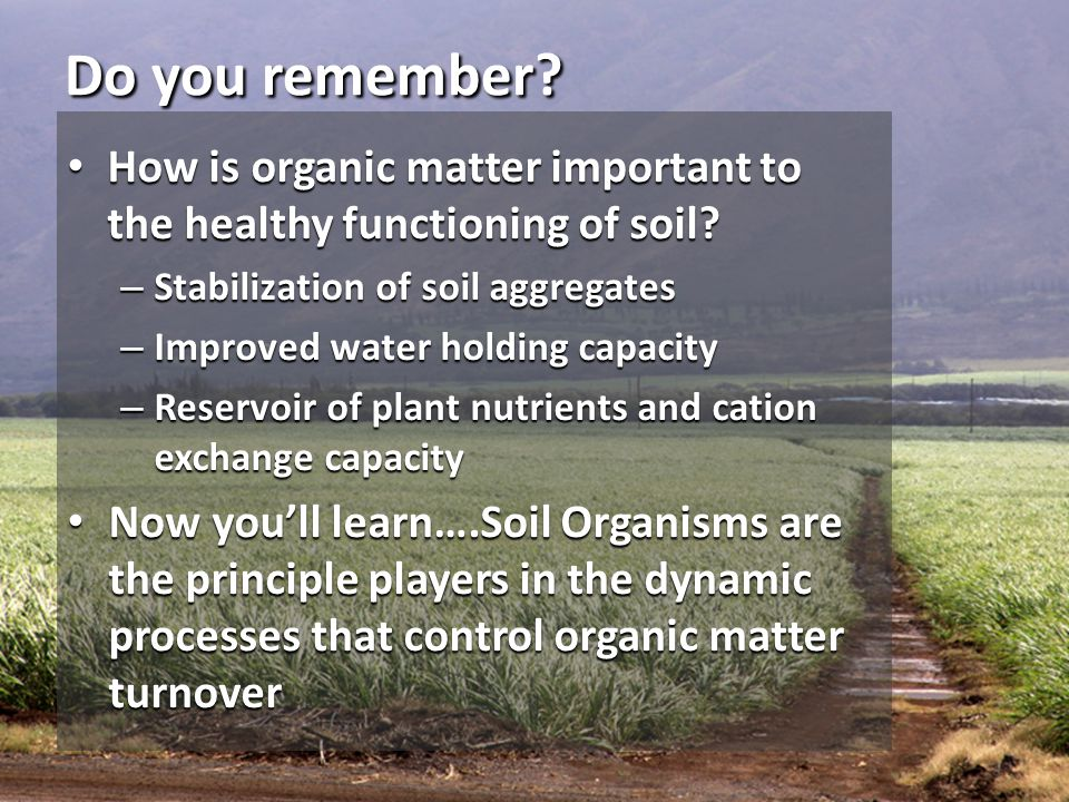 Do you remember How is organic matter important to the healthy functioning of soil Stabilization of soil aggregates.
