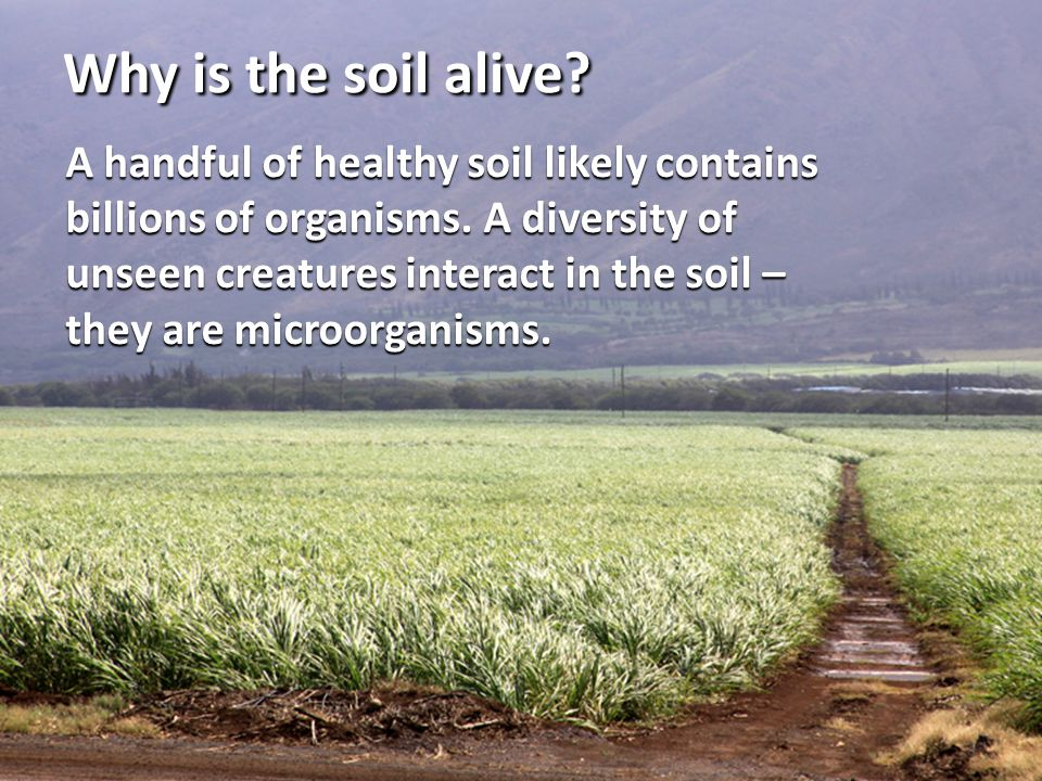 Why is the soil alive