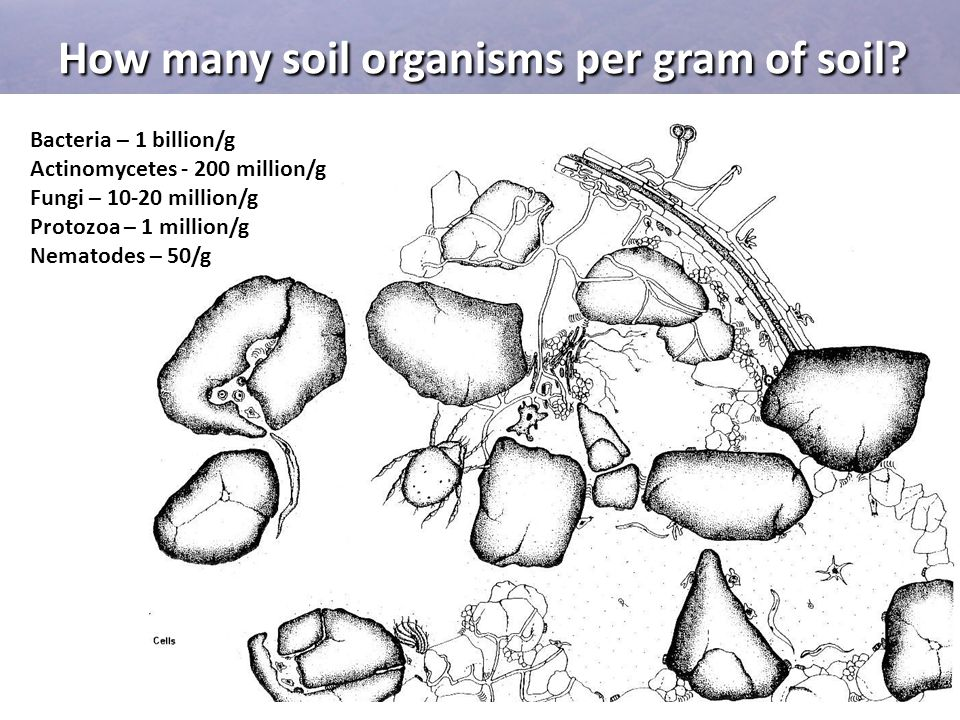 How many soil organisms per gram of soil