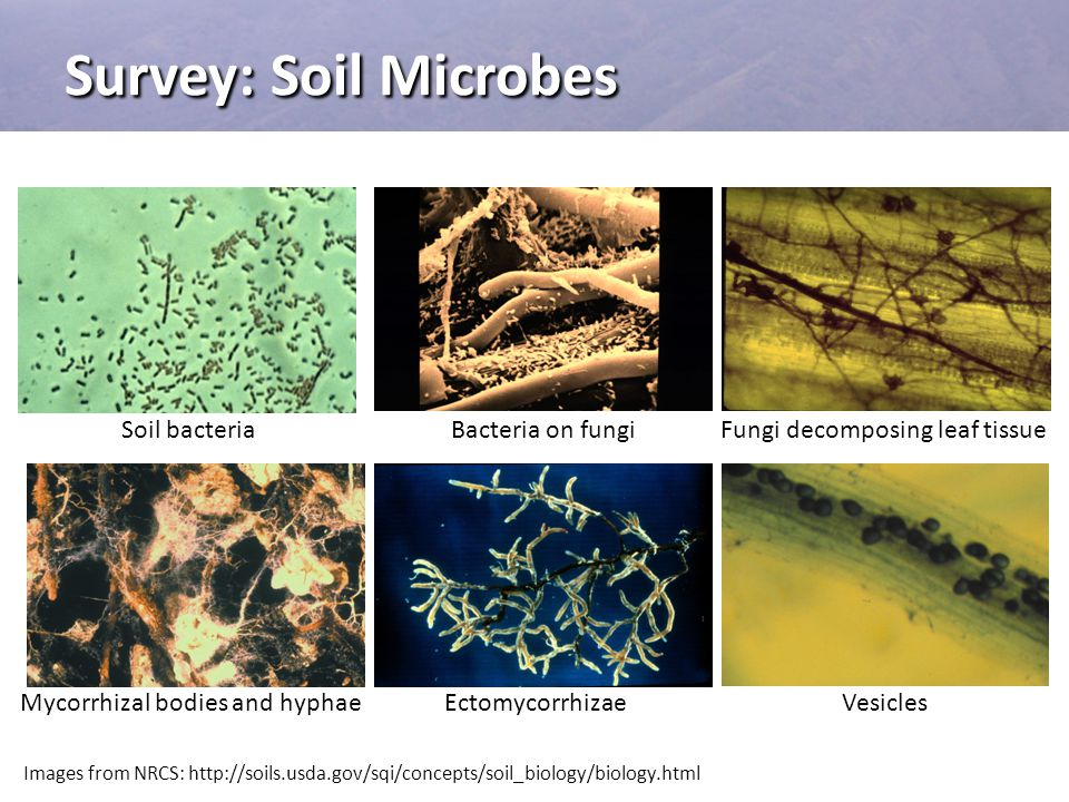 Survey: Soil Microbes Soil bacteria Bacteria on fungi