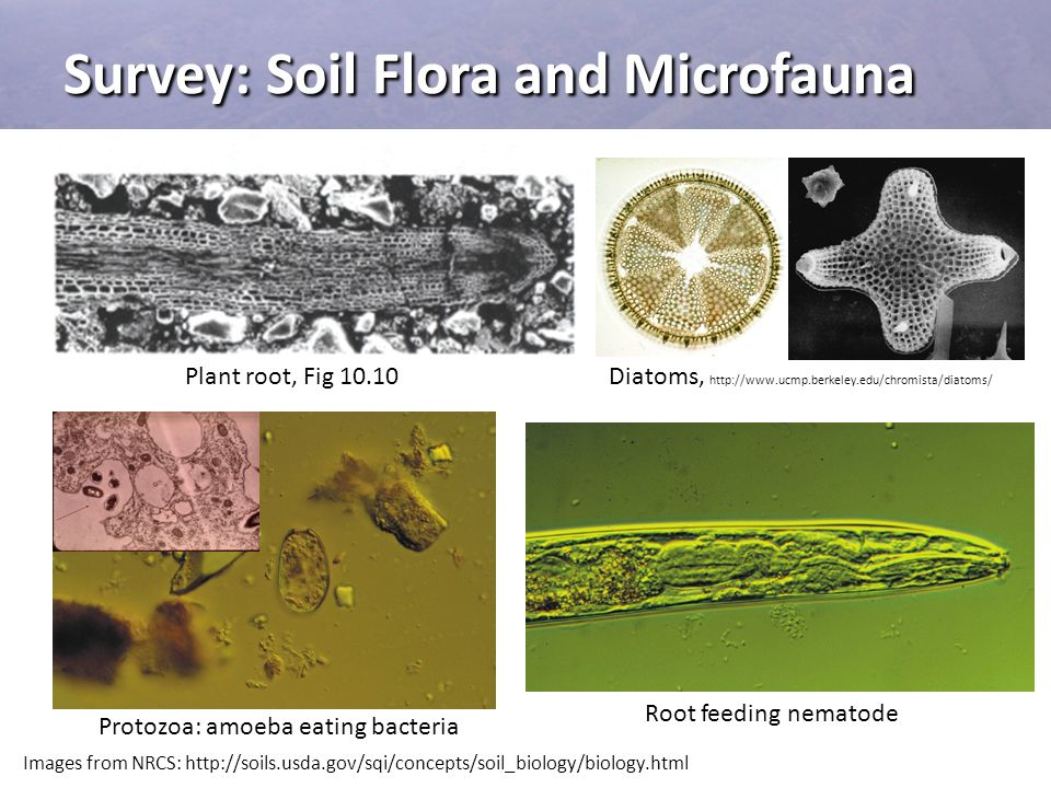 Survey: Soil Flora and Microfauna