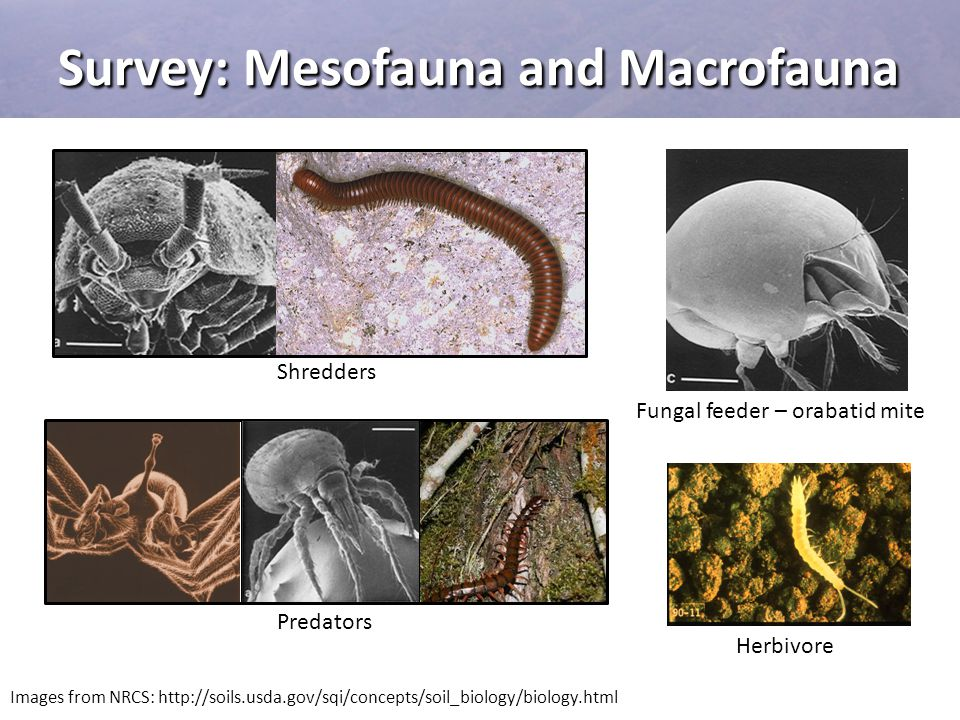 Survey: Mesofauna and Macrofauna
