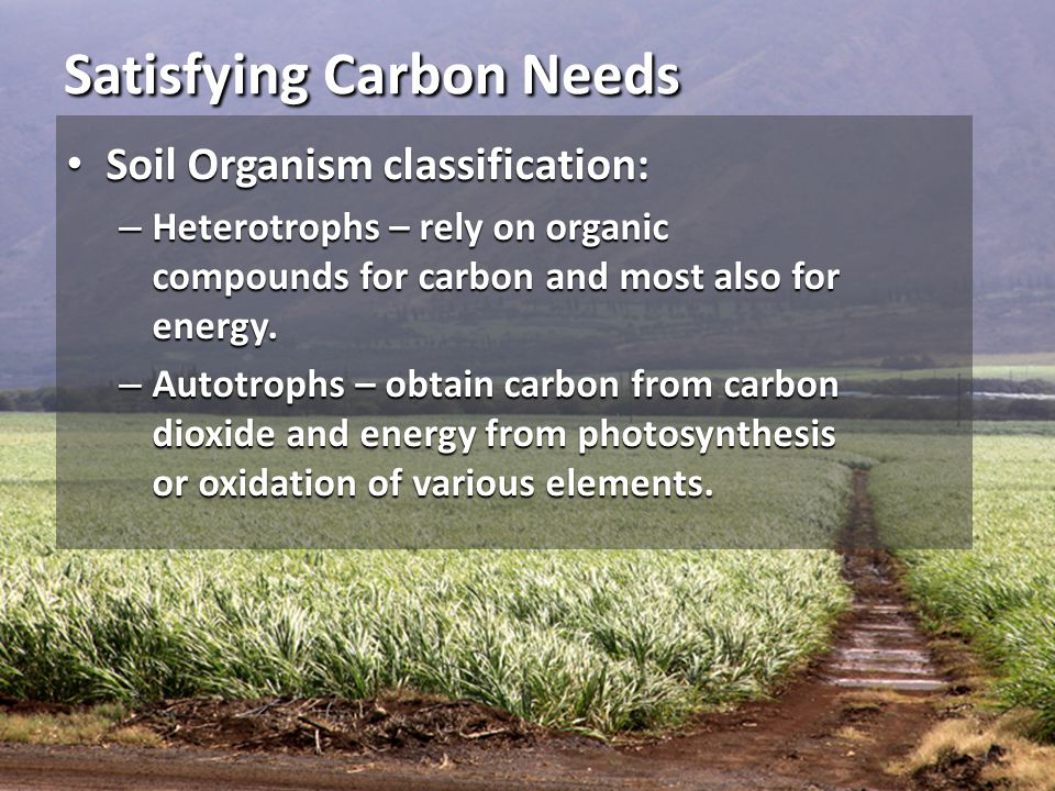 Satisfying Carbon Needs