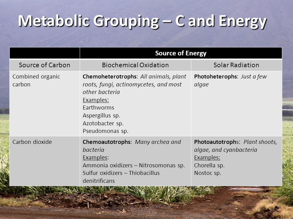 Metabolic Grouping – C and Energy