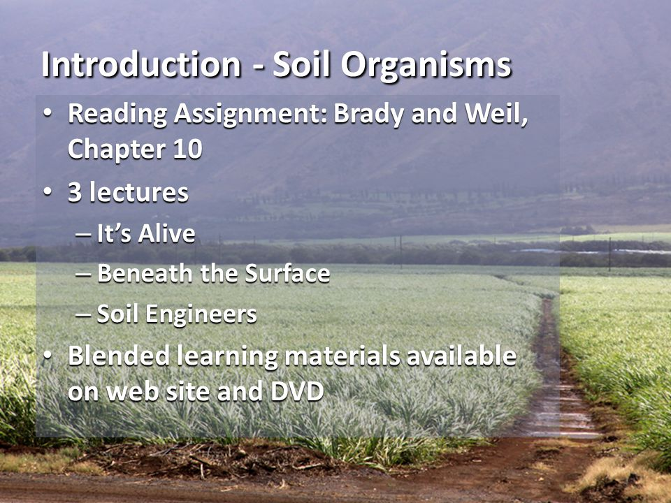 Introduction - Soil Organisms