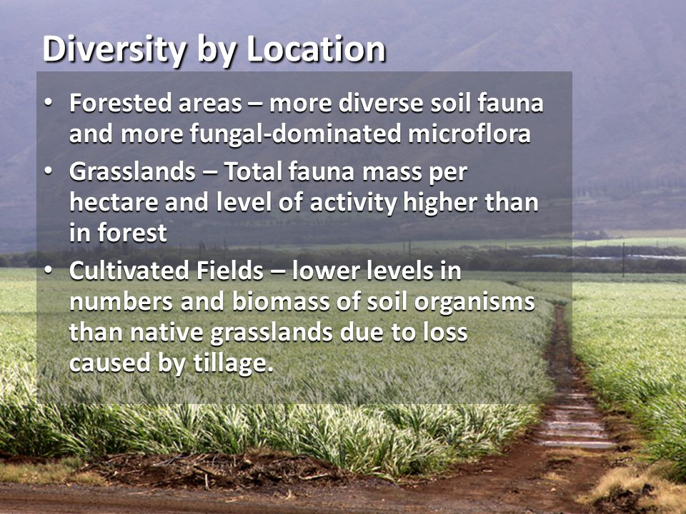 Diversity by Location Forested areas – more diverse soil fauna and more fungal-dominated microflora.
