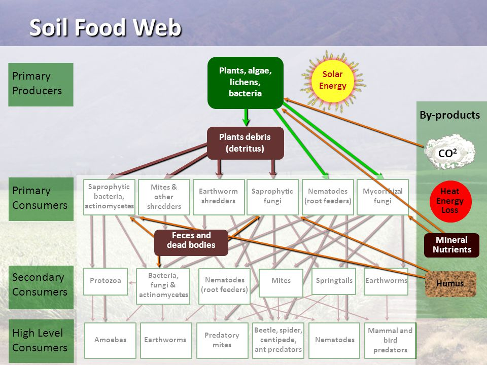 Soil Food Web Primary Producers By-products CO2 Primary Consumers