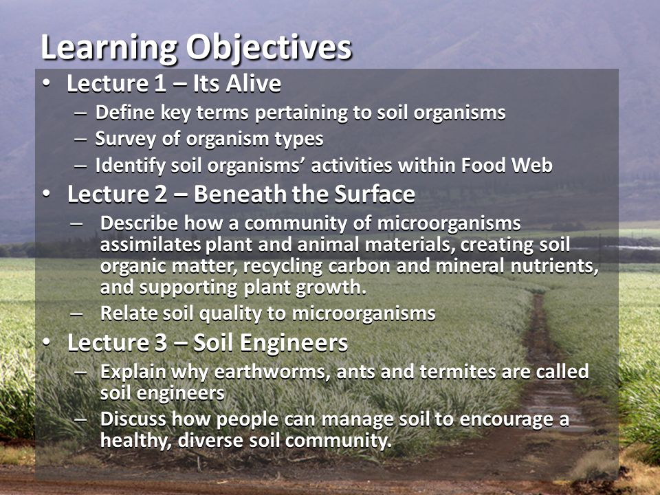 Learning Objectives Lecture 1 – Its Alive