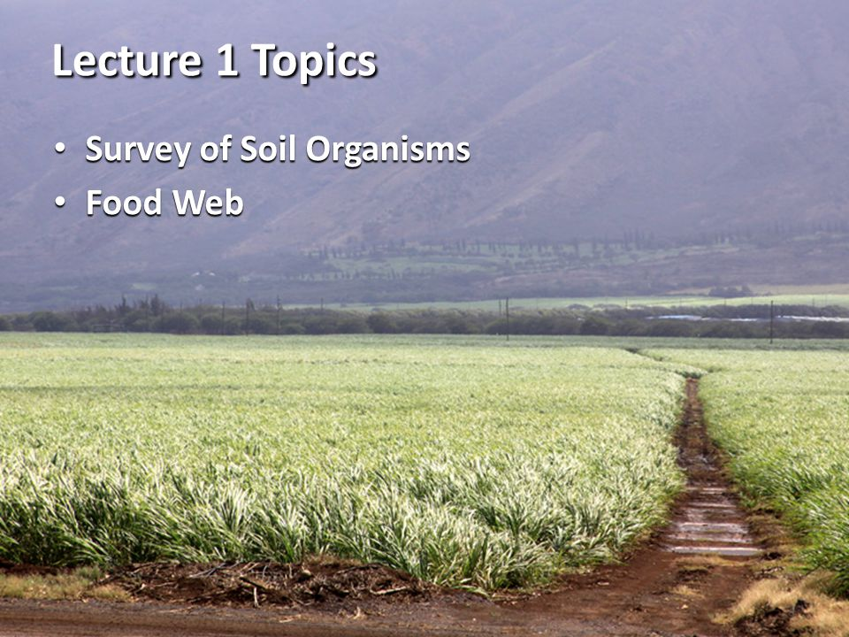 Lecture 1 Topics Survey of Soil Organisms Food Web