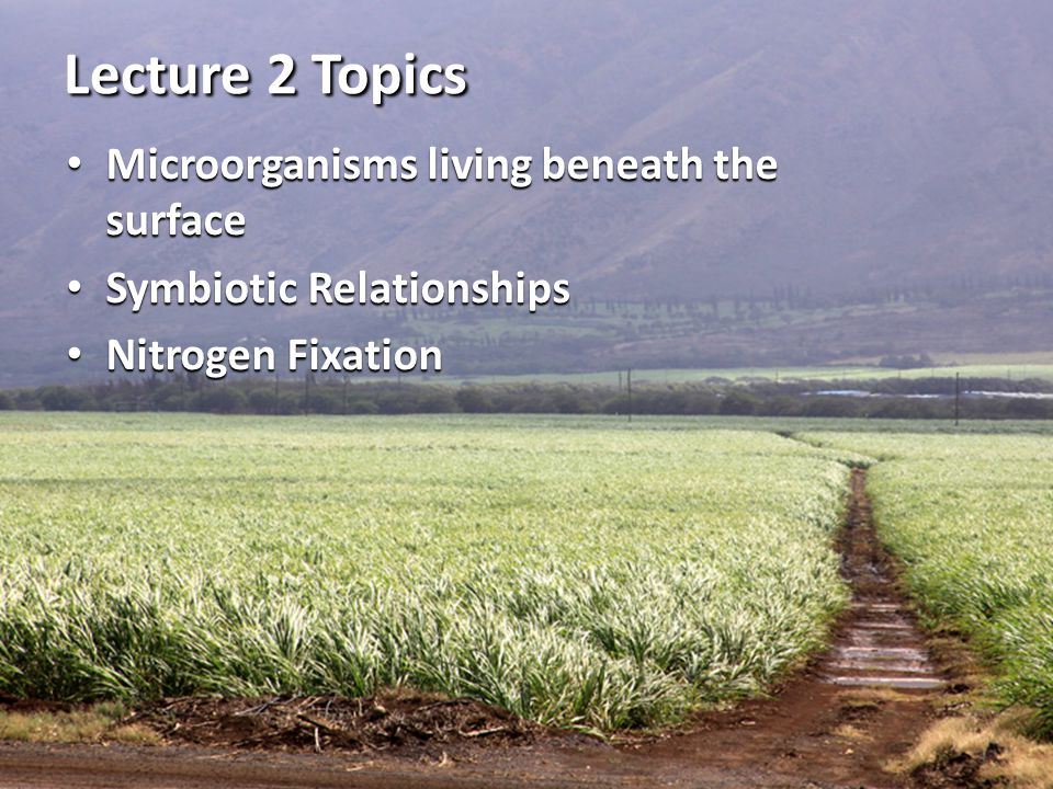Lecture 2 Topics Microorganisms living beneath the surface