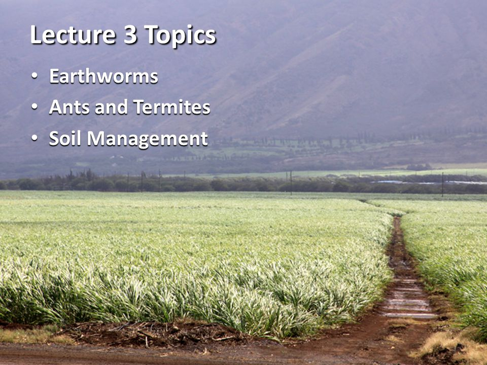 Lecture 3 Topics Earthworms Ants and Termites Soil Management