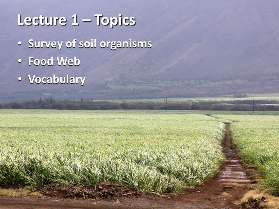 Lecture 1 – Topics Survey of soil organisms Food Web Vocabulary