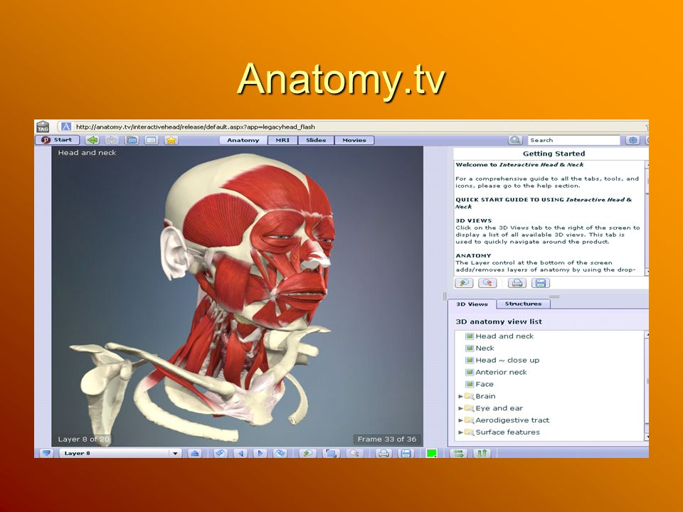 Anatomy.tv