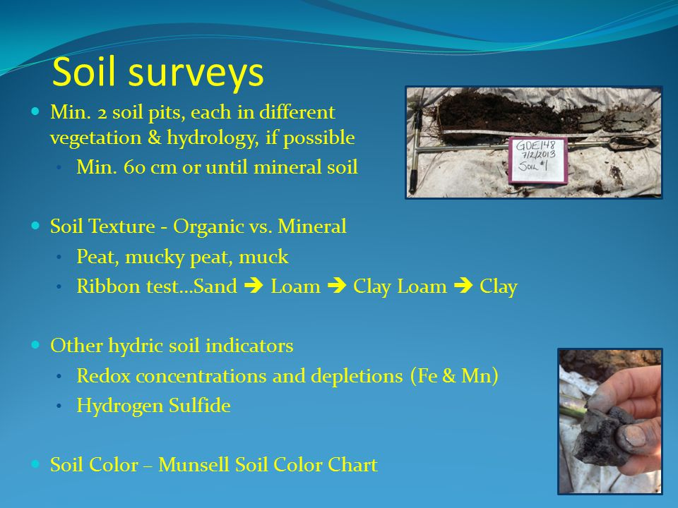 Soil surveys Min. 2 soil pits, each in different vegetation & hydrology, if possible.