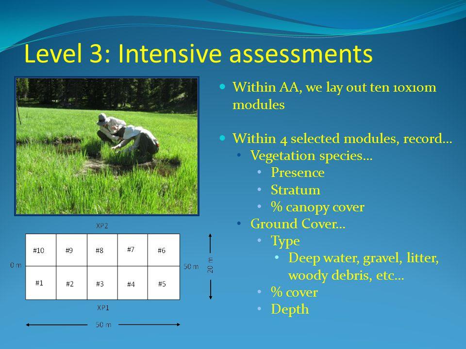 Level 3: Intensive assessments