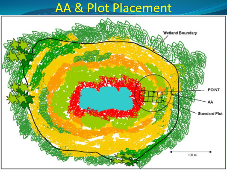 AA & Plot Placement