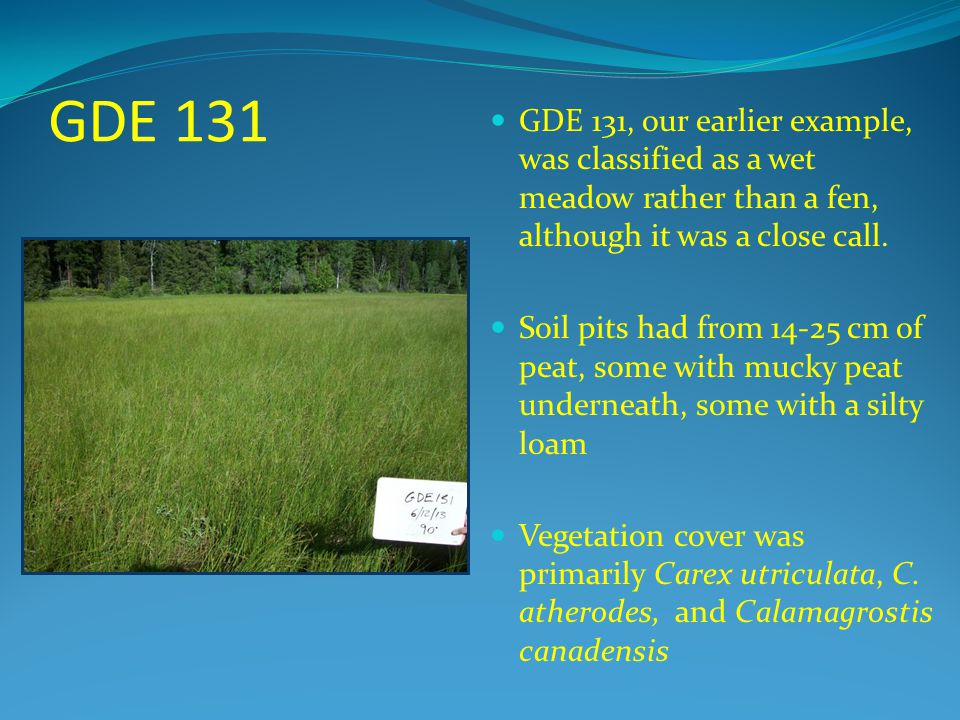 GDE 131 GDE 131, our earlier example, was classified as a wet meadow rather than a fen, although it was a close call.