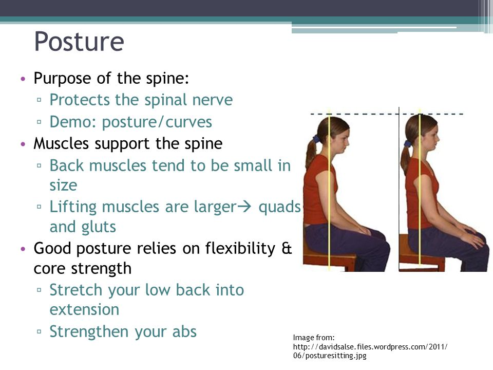 Posture Purpose of the spine: Protects the spinal nerve