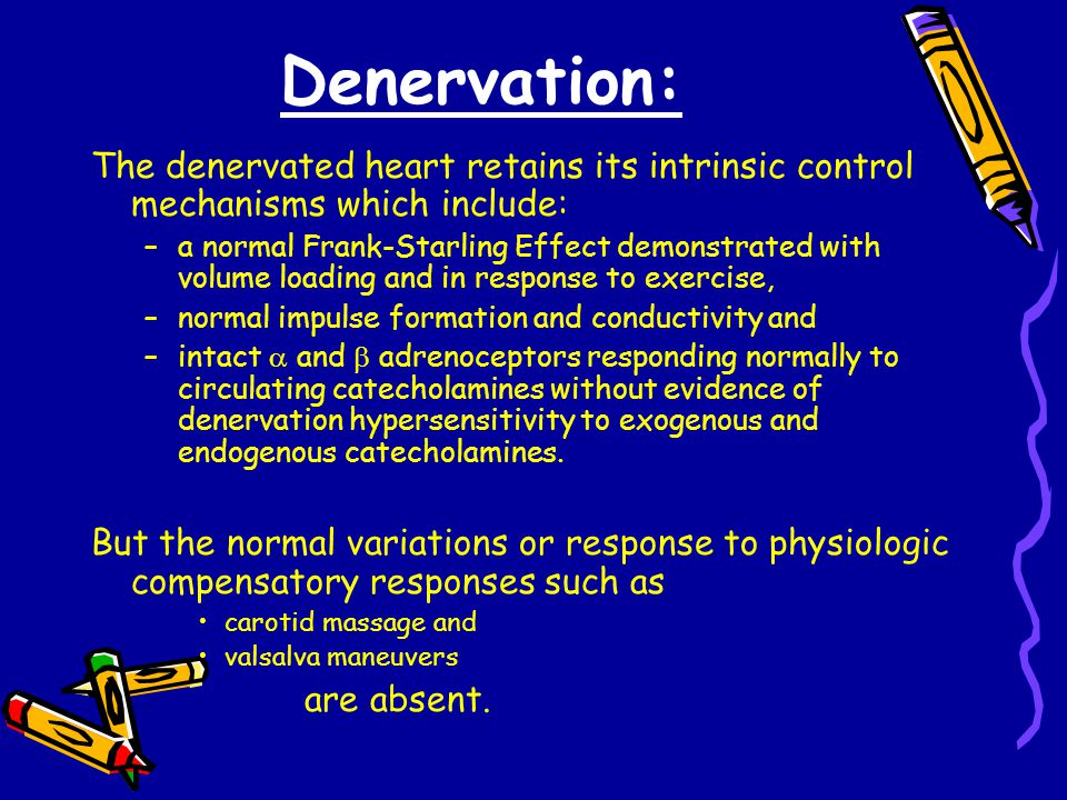 Denervation: The denervated heart retains its intrinsic control mechanisms which include: