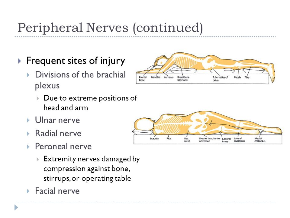 Peripheral Nerves (continued)