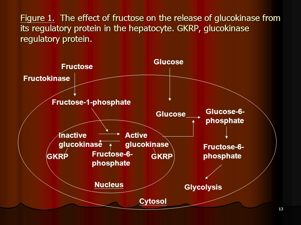 Figure 1. The effect of fructose on the release of glucokinase from its regulatory protein in the hepatocyte. GKRP, glucokinase regulatory protein.