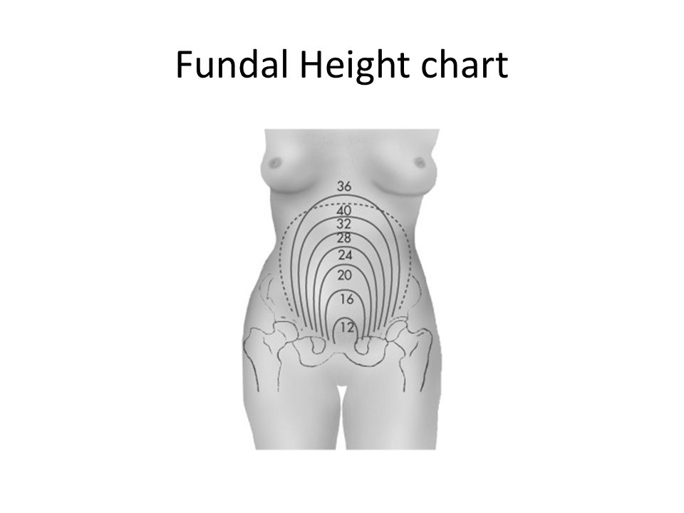 Fundal Height chart