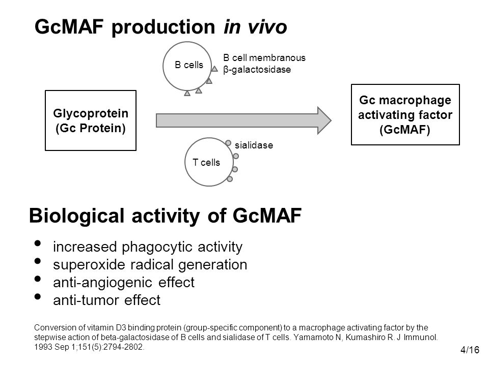 Biological activity of GcMAF