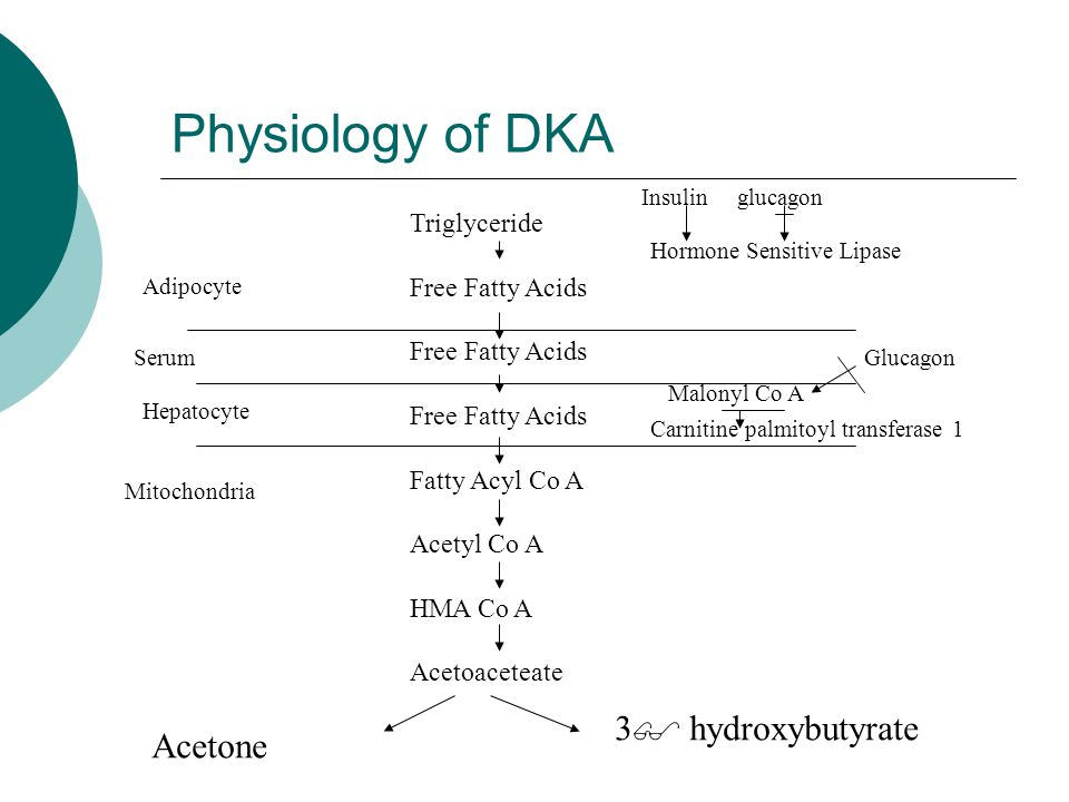 Physiology of DKA 3 hydroxybutyrate Acetone Triglyceride