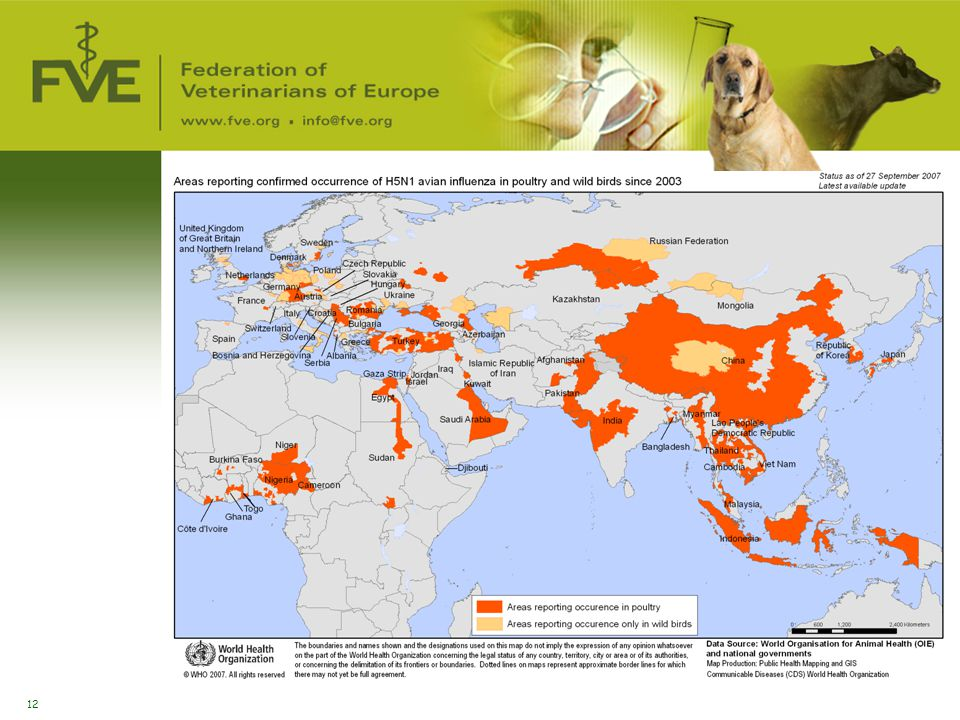 Avian Influenza in animals
