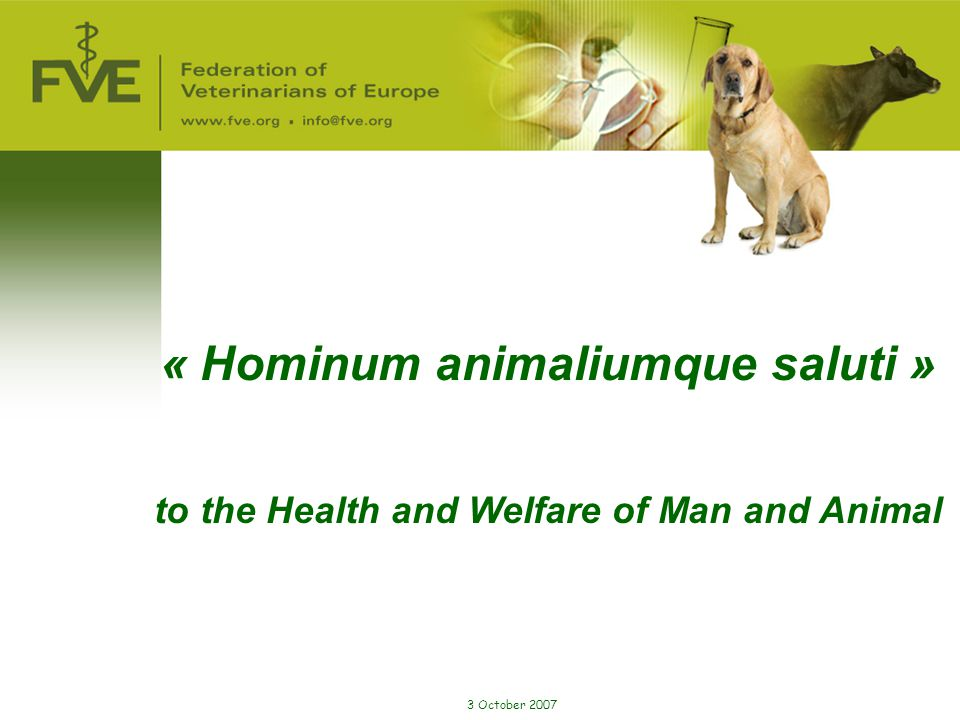 « Hominum animaliumque saluti »