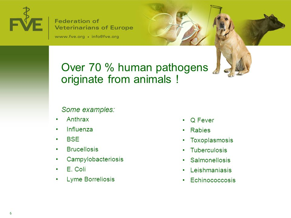Over 70 % human pathogens originate from animals !