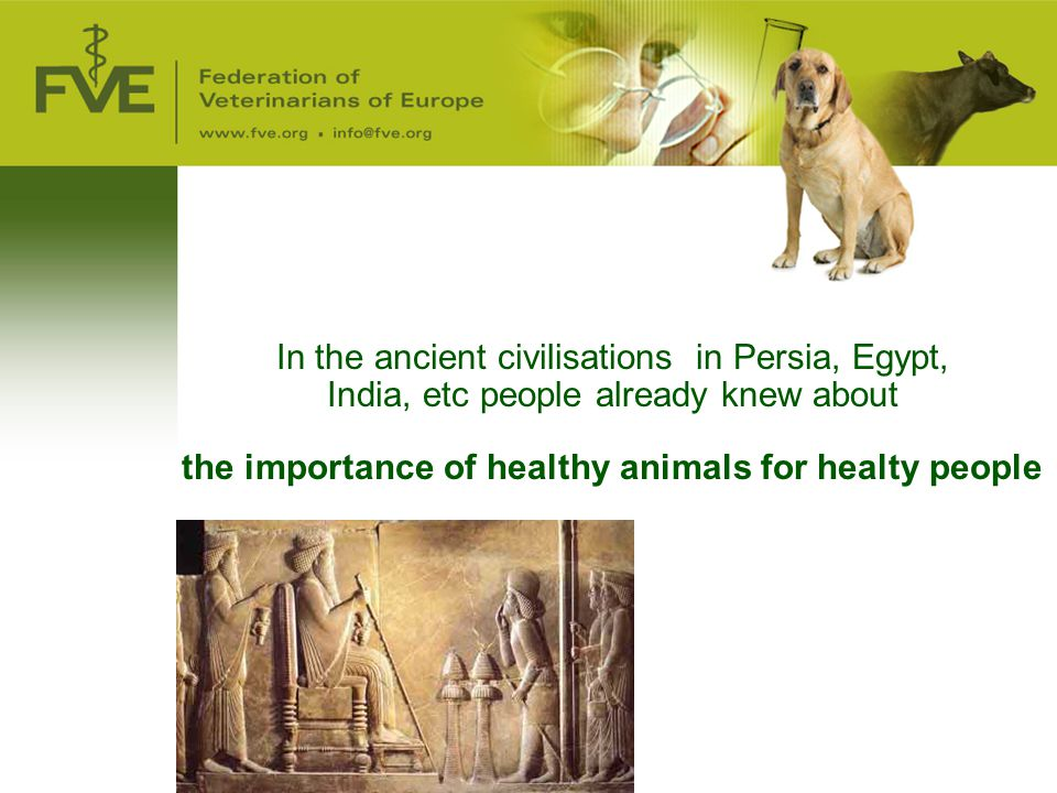 the importance of healthy animals for healty people