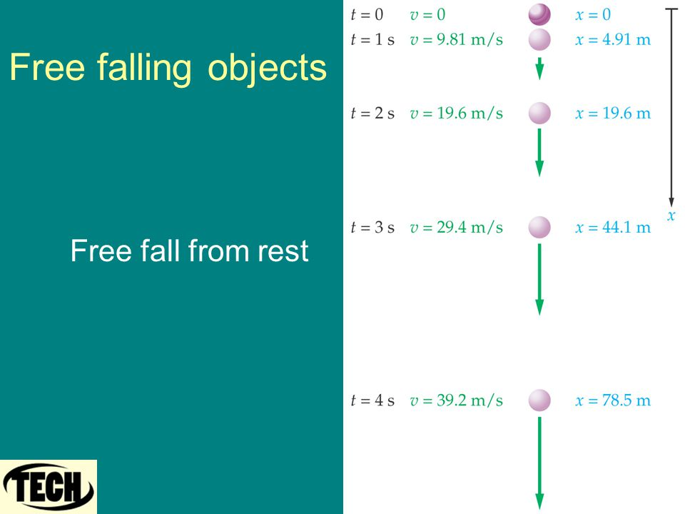 Free falling objects Free fall from rest