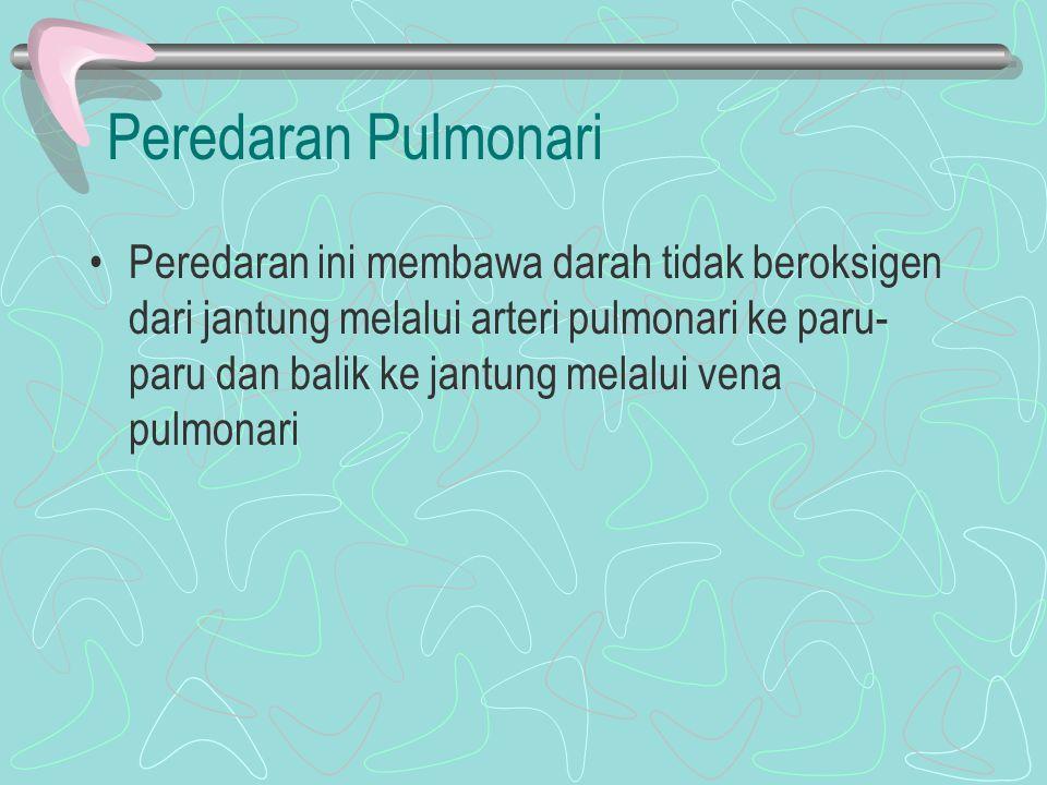 Peredaran Pulmonari