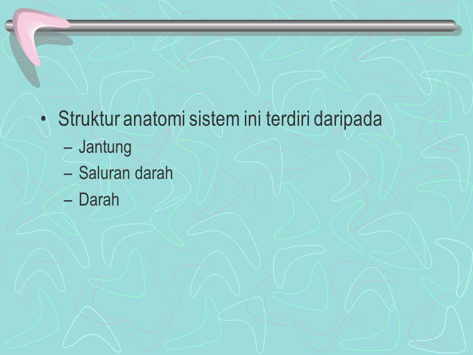 Struktur anatomi sistem ini terdiri daripada