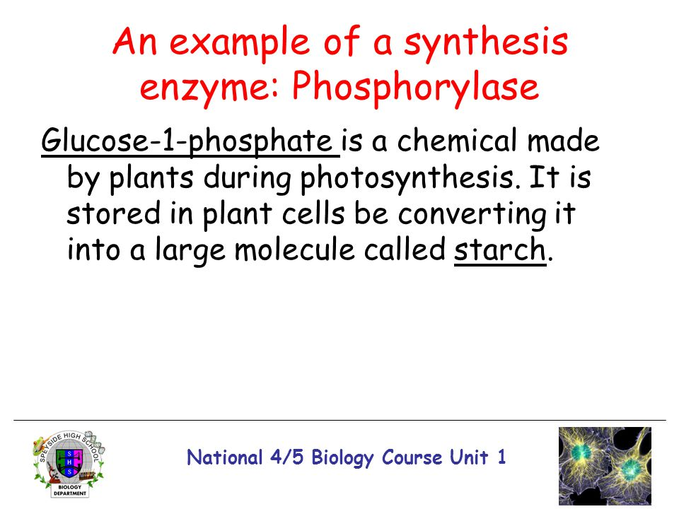 An example of a synthesis enzyme: Phosphorylase