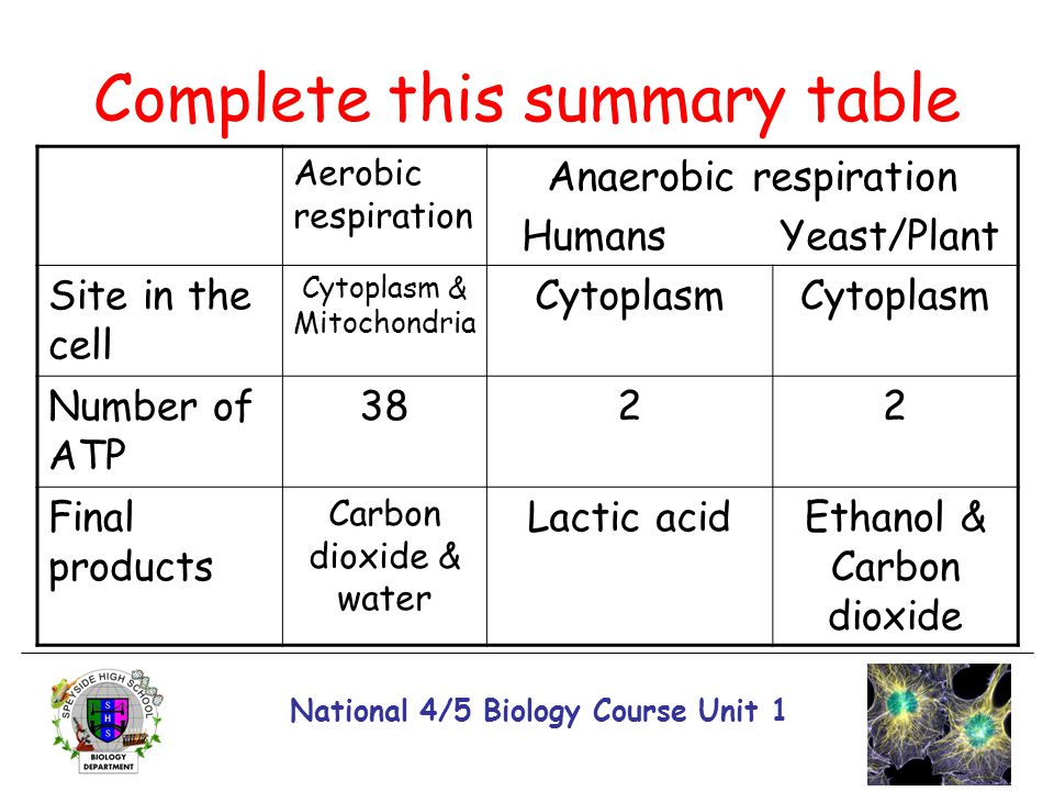 Complete this summary table