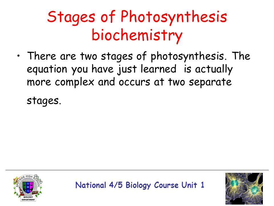 Stages of Photosynthesis biochemistry