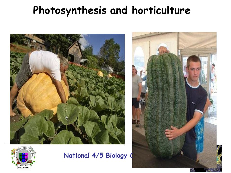 Photosynthesis and horticulture National 4/5 Biology Course Unit 1