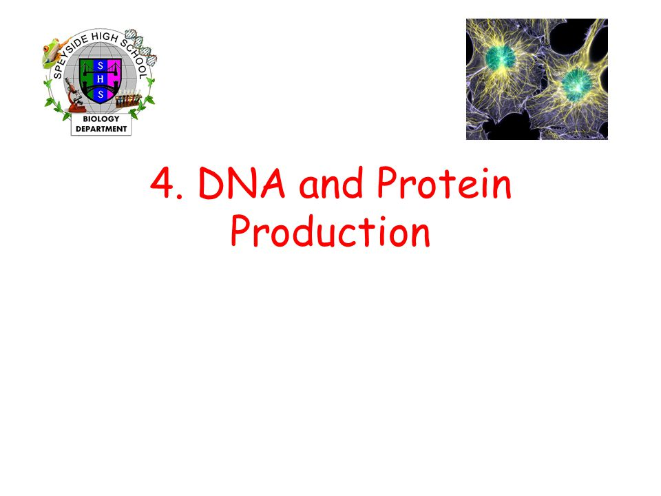 4. DNA and Protein Production