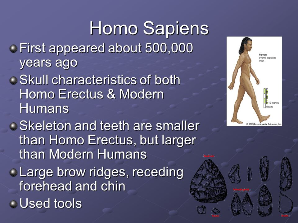 Homo Sapiens First appeared about 500,000 years ago