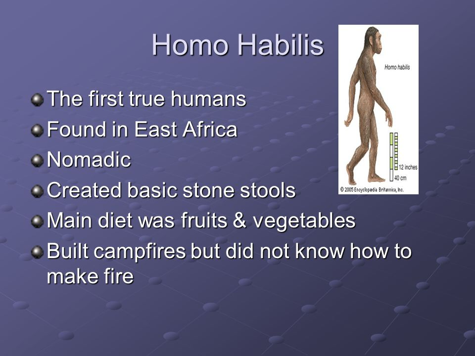 Homo Habilis The first true humans Found in East Africa Nomadic