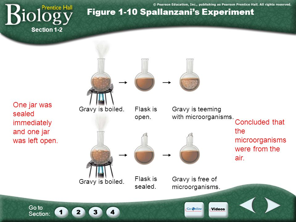 Figure 1-10 Spallanzani's Experiment