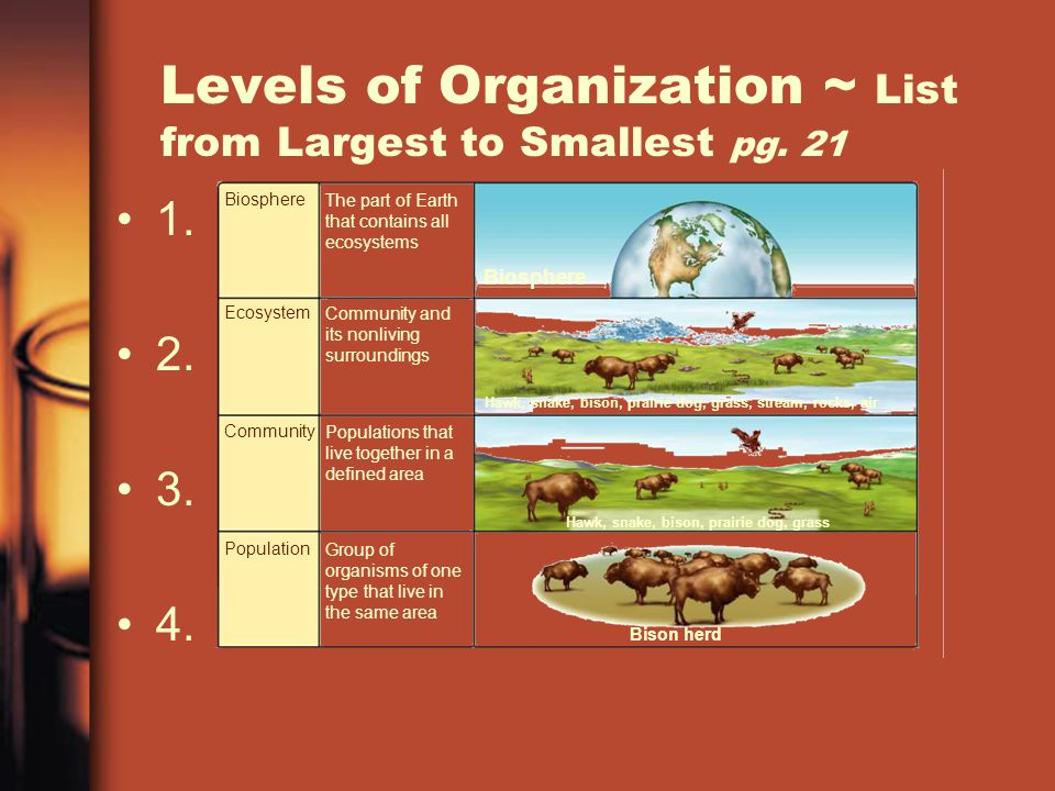 Levels of Organization ~ List from Largest to Smallest pg. 21