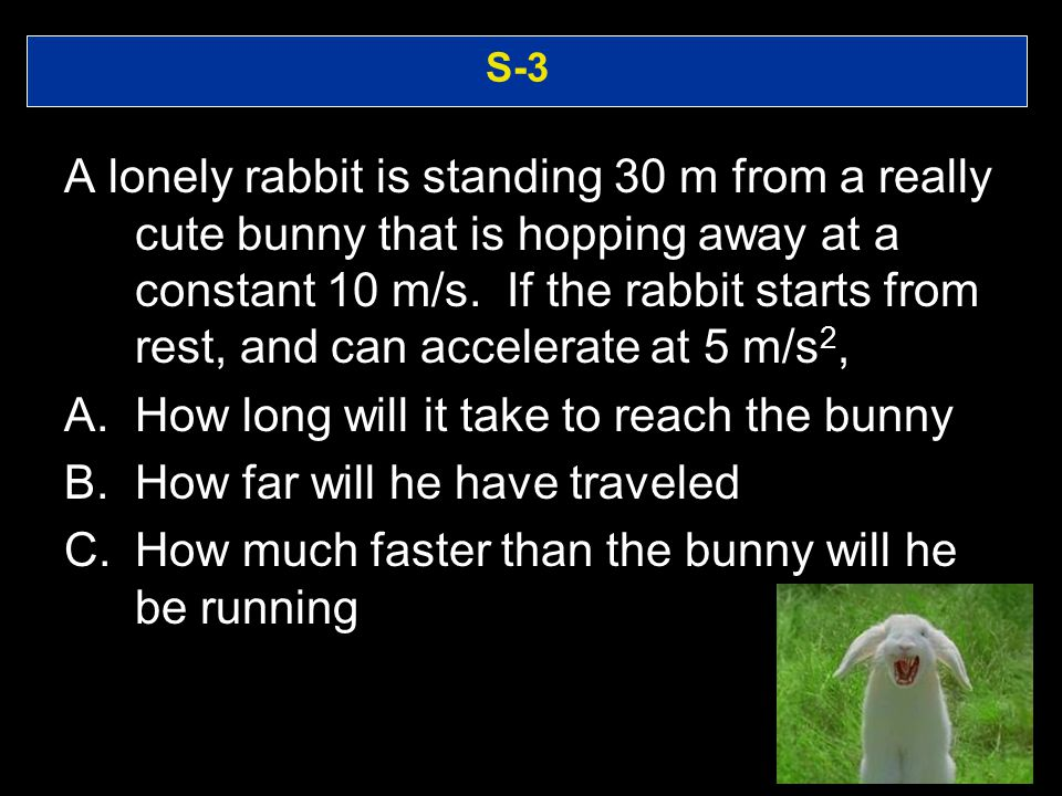 How long will it take to reach the bunny How far will he have traveled