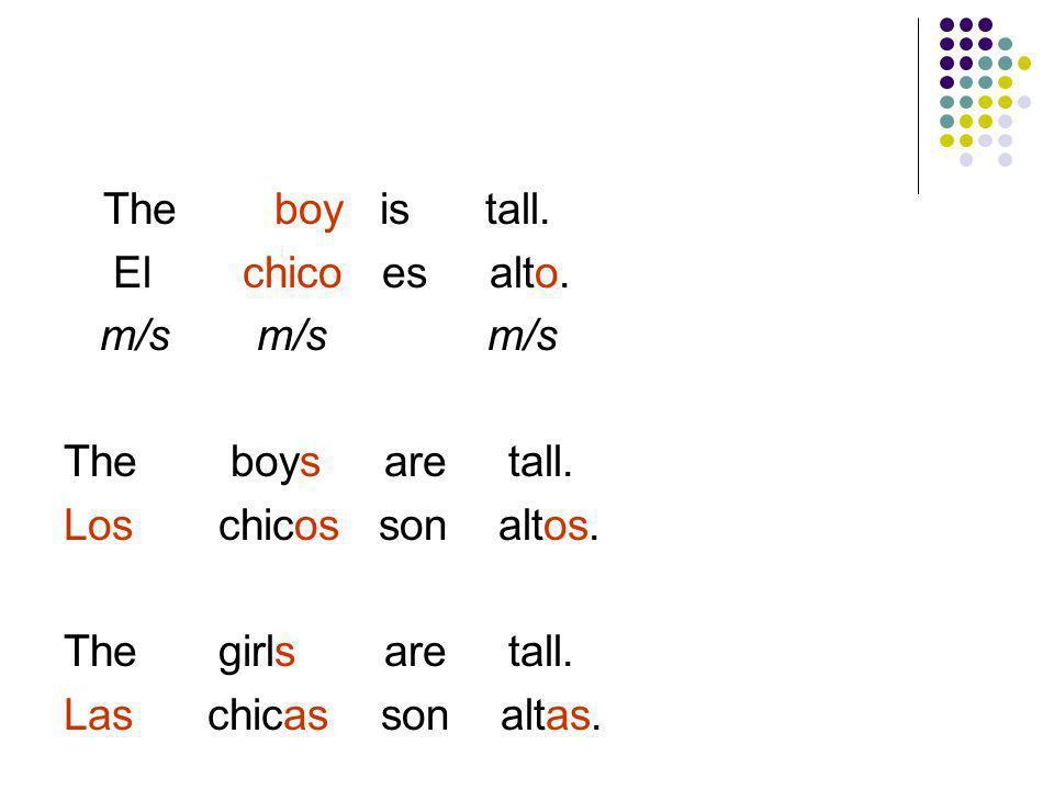 The boy is tall. El chico es alto. m/s m/s m/s. The boys are tall.