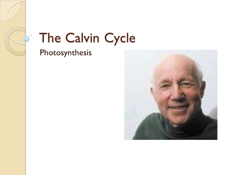 The Calvin Cycle Photosynthesis
