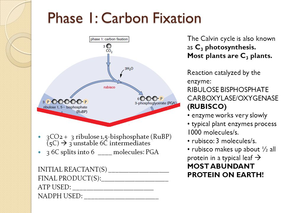 Phase 1: Carbon Fixation